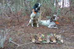 venta-cachorros-setter-becada-caza-navarra-25