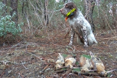 venta-cachorros-setter-becada-caza-navarra-26
