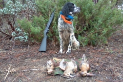 venta-cachorros-setter-becada-caza-navarra-27