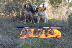 venta-cachorros-setter-becada-caza-navarra-35