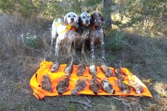 venta-cachorros-setter-becada-caza-navarra-38