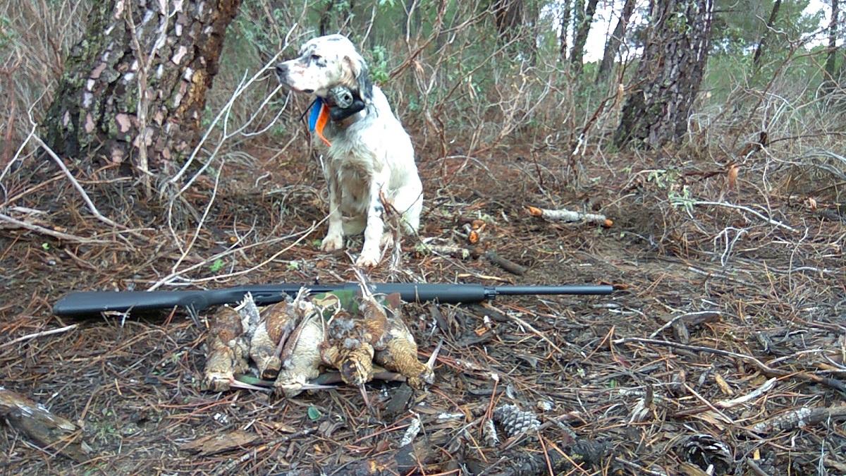 venta-cachorros-setter-becada-caza-navarra-28